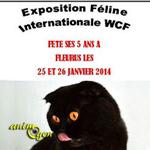 Exposition Féline Internationale WCF à Fleurus (Belgique), du samedi 25 au dimanche 26 janvier 2014