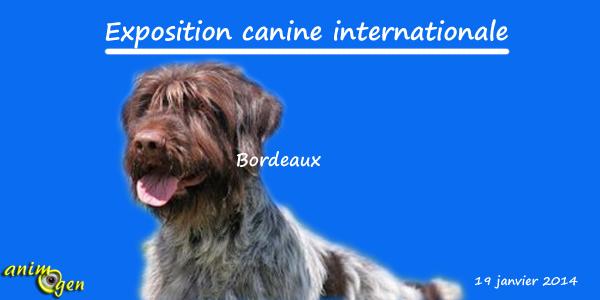 Exposition canine internationale à Bordeaux (33), le dimanche 19 janvier 2014