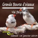 Grande Bourse d'oiseaux à Visé (Belgique), le samedi 18 janvier 2014