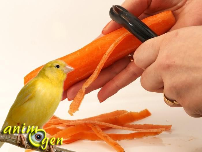Comment fabriquer une pâtée maison pour nos canaris et autres oiseaux exotiques ?