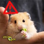 Alimentation : les aliments toxiques pour les hamsters (liste)