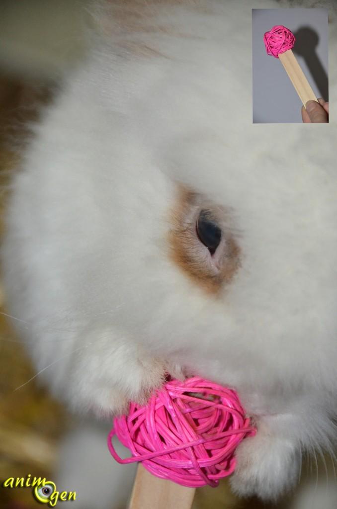 Accessoire pour rongeurs, lapins et perroquets : bûchettes de bois (Aloya)