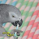 Jouet à fabriquer pour rongeur et perroquet : paille en carton garnie (Maisons du Monde)