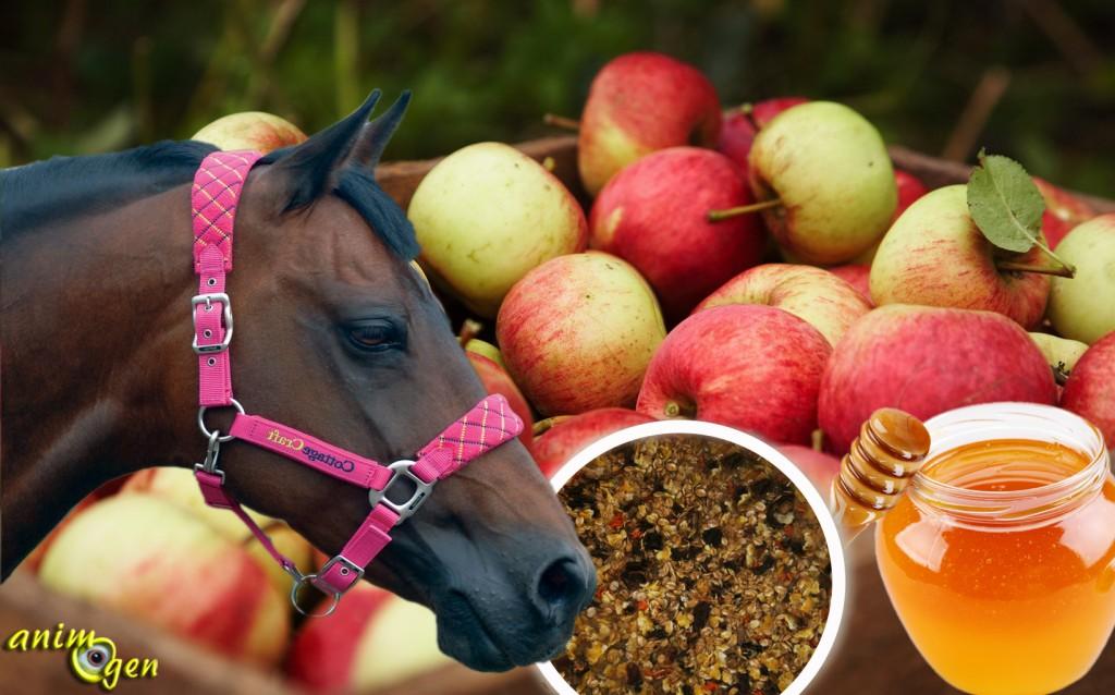 """Le """"mash"""", un plat chaud d'hiver pour les chevaux (recette)"""