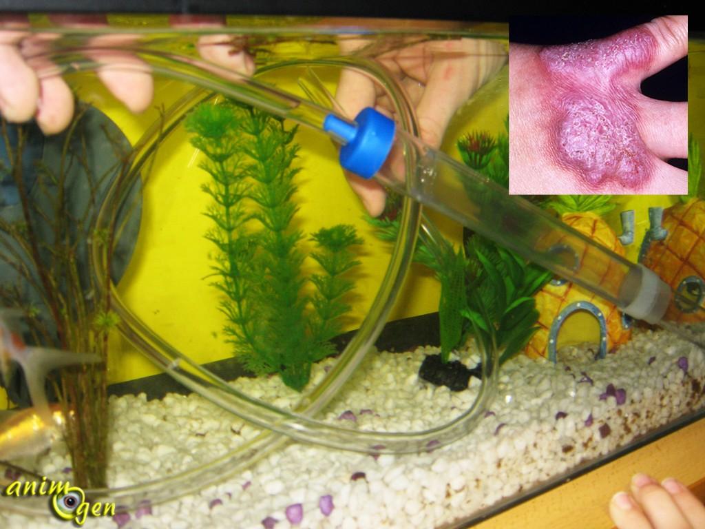 L'aquariophilie, un hobby à risque pour les passionnés