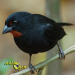 Comment les oiseaux se nourrissent-ils dans la nature ?