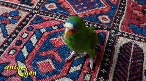 Le perroquet en captivité est-il un animal de routine ?