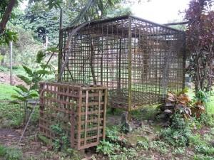 Les métaux toxiques  pour les perroquets (liste, causes, symptômes, prévention)