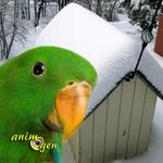 Les dangers de l'hiver pour nos perroquets : froid et chaleur