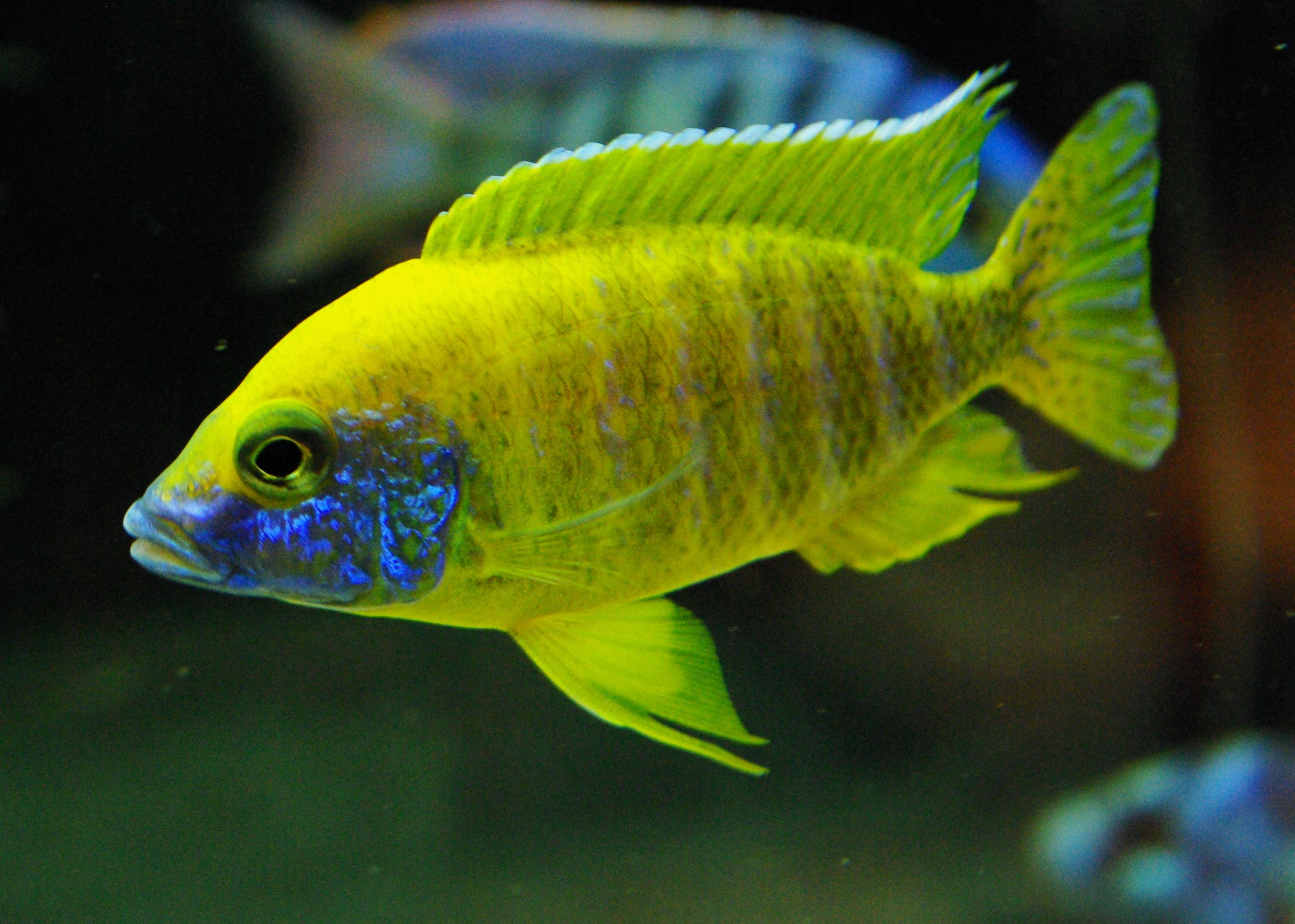 Poisson Deau Douce pour Aquarium des photos, des photos de fond, fond ...
