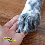 Nos chiens nous aiment-ils ?