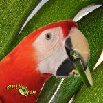 Alimentation : les courgettes pour nos perroquets