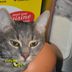 Alimentation : recette de friandise pour chat au thon