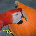 Le potimarron, une courge aux trésors pour nos perroquets