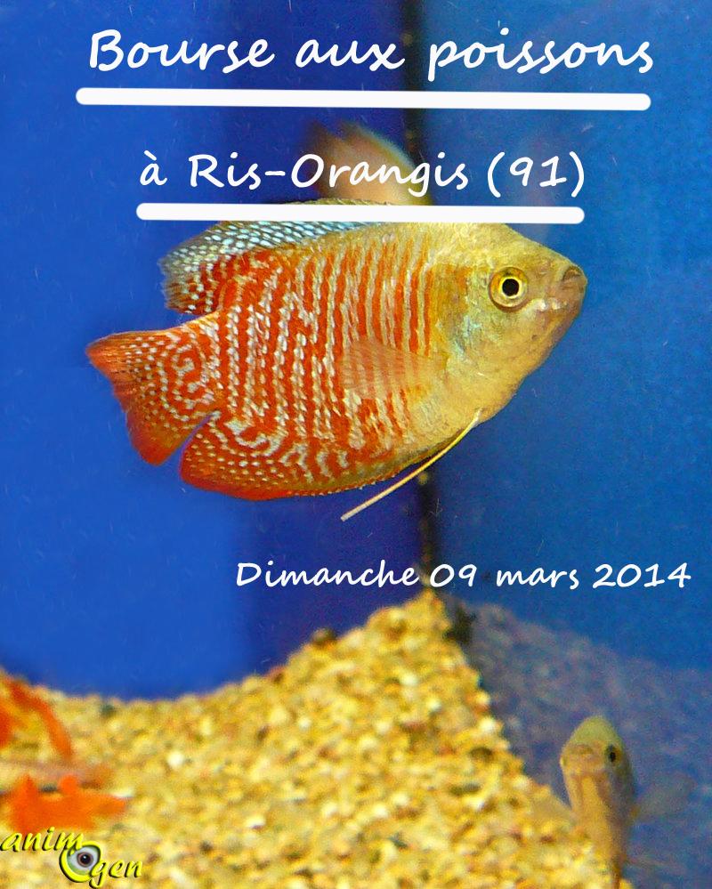 Bourse aux poissons à Ris-Orangis (91), le dimanche 09 mars 2014