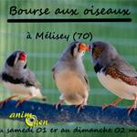 Bourse aux oiseaux à Mélisey (70), du samedi 01 er au dimanche 02 mars 2014