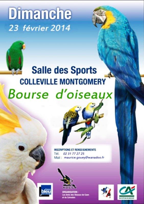 11 ème Bourse d'oiseaux à Colleville Montgomery (14), le dimanche 23 février 2014