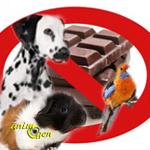 Les dangers du chocolat pour nos chiens, chats et autres animaux de compagnie