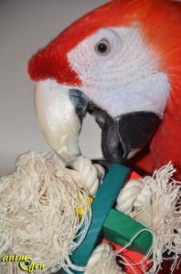 Jouet de patte pour perroquet : balle de bois et corde (Parrot Parcel)