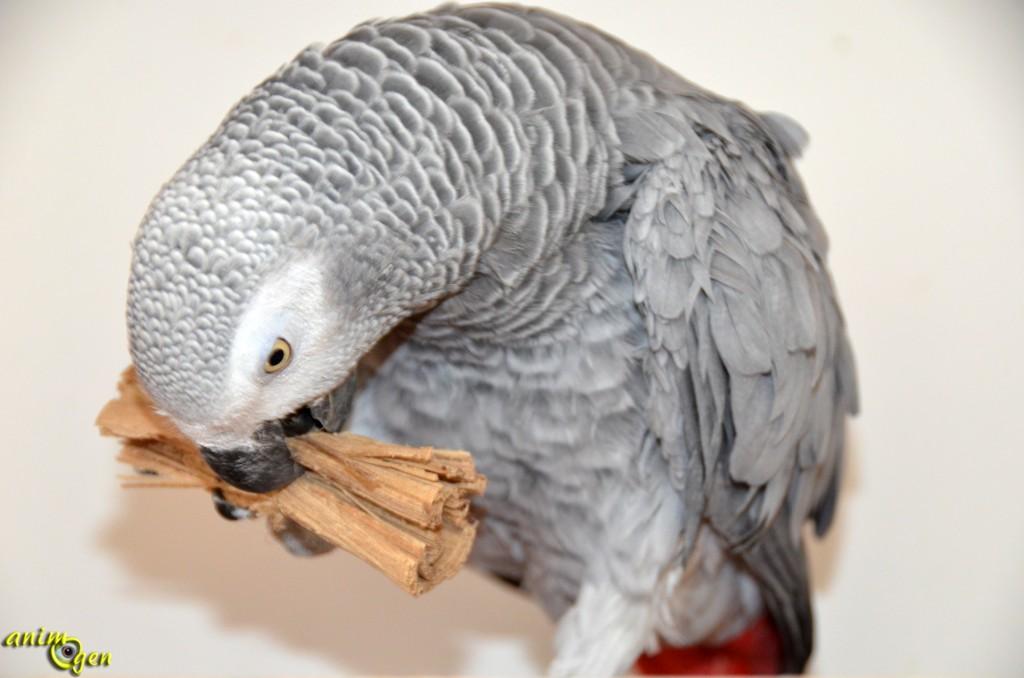 Jouet de patte pour perroquet : lot de trois jeux en fibres naturelles (Super Bird)