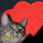 Fabriquez un jouet pour chat  qui a du cœur pour la Saint Valentin