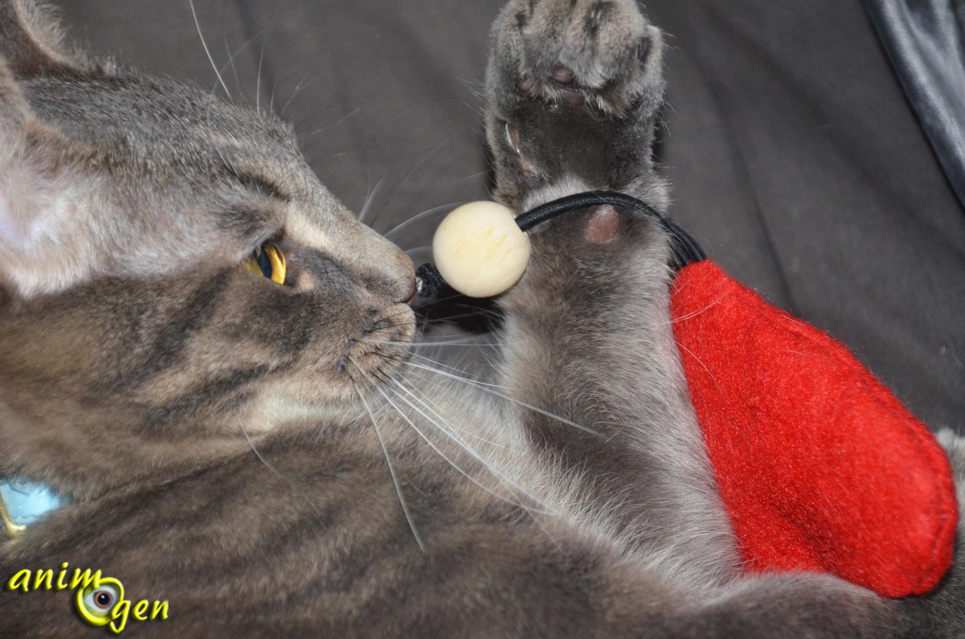fabriquez un jouet pour chat qui a du c ur pour la saint valentin animogen. Black Bedroom Furniture Sets. Home Design Ideas