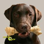 Os à mâcher pour chiens : comment choisir un os en buffle ?