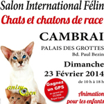 Salon International Félin à Cambrai (59), le dimanche 23 février 2014