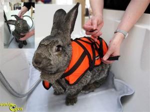 L'hydrothérapie Sant%C3%A9-lapins-hydroth%C3%A9rapie-baln%C3%A9oth%C3%A9rapie-eau-nac-lagomorphes-rongeurs-animal-animaux-compagnie-animogen-3-300x225