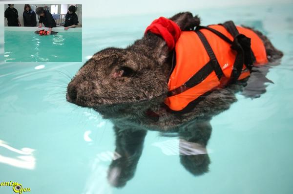 Santé : quand l'hydrothérapie vient au secours de l'arthrite de nos lapins de compagnie