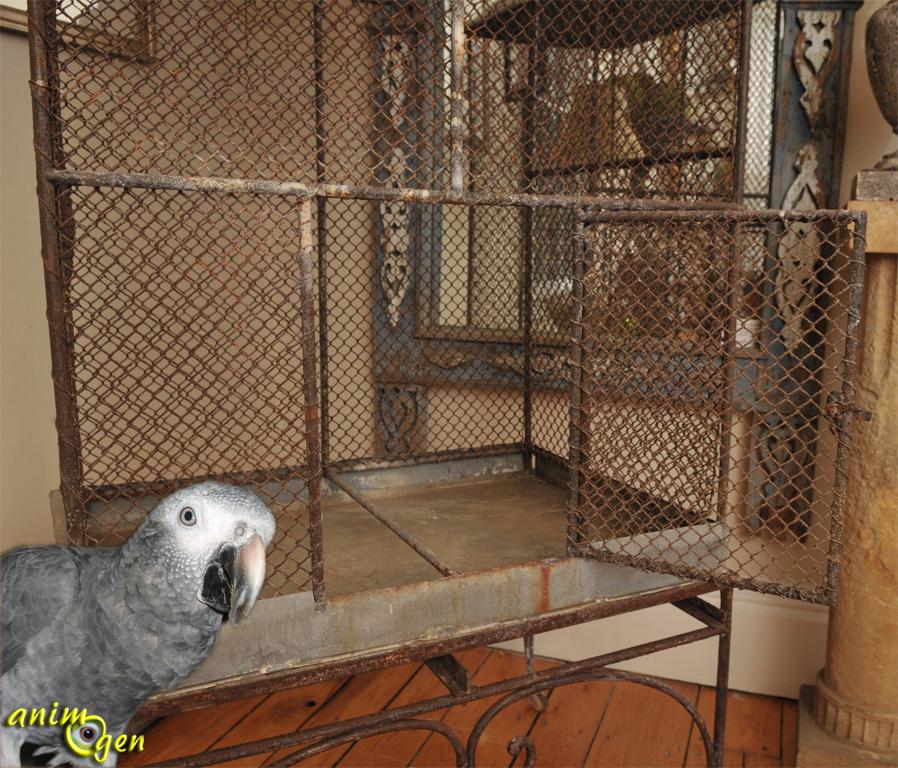 Métaux toxiques pour les perroquets : comment déceler la présence de zinc ?