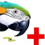 Santé : problèmes pouvant survenir chez les perroquets lors du nourrissage à la main (EAM) 1/2