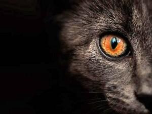 Education, comportement : comment adapter notre mode de vie avec un chat sourd ?