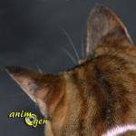 Les conséquences de la surdité sur la vie quotidienne d'un chat