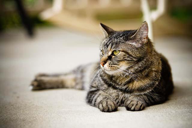 sant comment savoir si un chat est sourd animogen. Black Bedroom Furniture Sets. Home Design Ideas