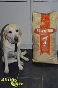 Alimentation : croquettes Sélection, Croc + (Royal Canin)