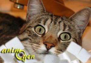 Alimentation : les chats sont-ils sensibles au goût du sucre ?