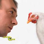 Education : comment manipuler nos poules d'agrément ?
