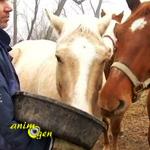 Quelle attitude adopter pour aborder des chevaux dans un pré ?