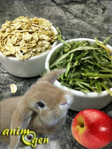 Alimentation biscuits aux pommes et au persil faits for Alimentation maison pour chien