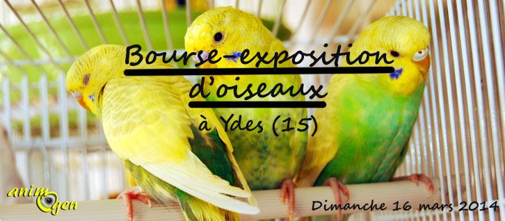 Bourse-exposition d'oiseaux à Ydes (15), le dimanche 16 mars 2014