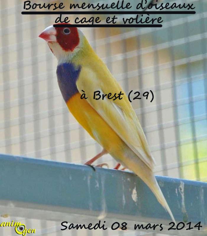 Bourse mensuelle d'oiseaux de cage et volière à Brest (29), le samedi 08 mars 2014