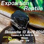 Exposition-Vente de reptiles à Rennes (35), le dimanche 13 avril 2014
