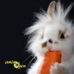 Lapins et carottes font-ils bon ménage ? La vérité sur Bugs Bunny