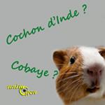 Cochons d'Inde et Cobayes, les mal nommés