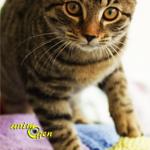 Les différentes facettes du comportement du chat de compagnie