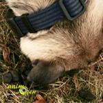 Coprophagie : pourquoi les animaux consomment-ils leurs excréments ?