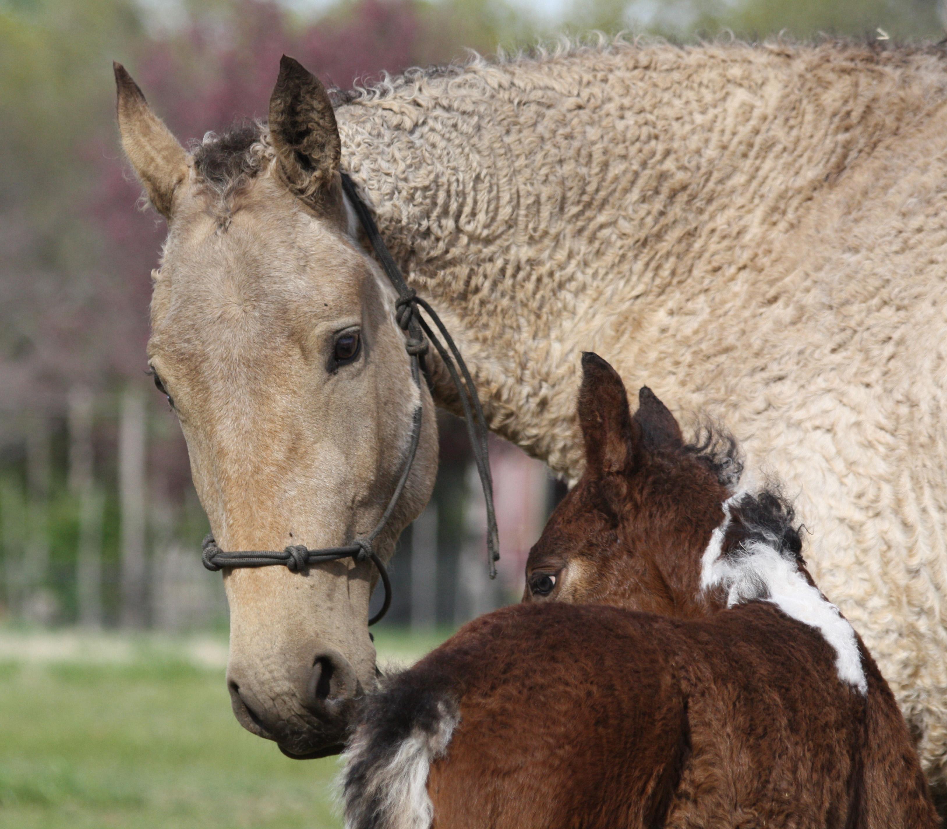 tiques chez les chevaux