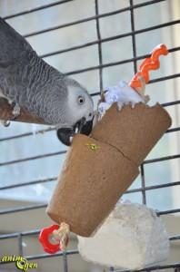 Jouets de foraging pour perroquet à faire soi-même