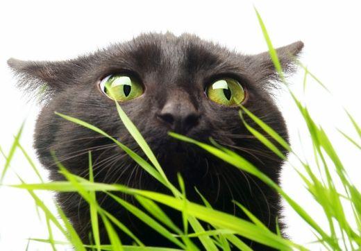 la gastrite chez le chat causes sympt mes et traitement animogen. Black Bedroom Furniture Sets. Home Design Ideas